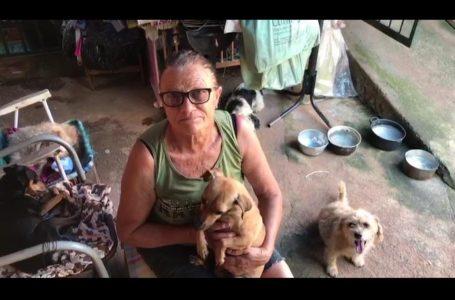 A luta de Dona Iva para cuidar de cães abandonados